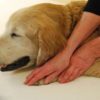 Energy Therapy for Animals