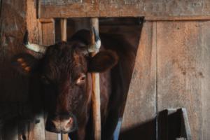 animalsfrompastlives-healingenergyservices