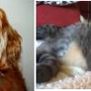 AnimalFriendsDeath-HealingEnergyTherapy